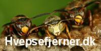 Hvepsefjerner.dk - hvepsebo og hvepse fjernes