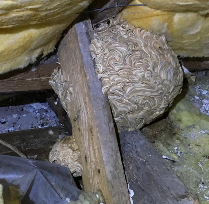 fjernelse af bier