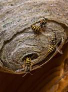 bier på loftet
